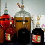 several carboys with different colored liquids, sealed with airlocks