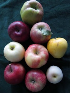A pile of apples, each different from the other