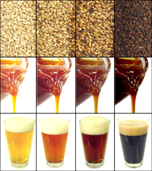 piles of different malts, corresponding liquid malt, and their beers