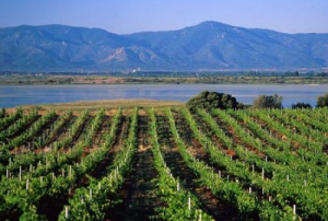 Vineyard ending in big lake and mountains